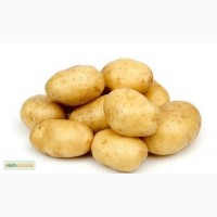 Картофель семенной Вега 1 РС