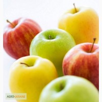 Покупаем яблоки разных сортов крупным оптом от производителей