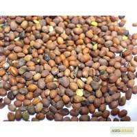 Продам семена РЕДЬКИ МАСЛИЧНОЙ, гречки, горчицы