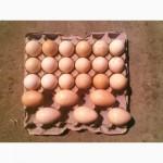 Продам инкубационное яйцо индюков
