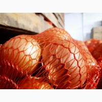 Лук репчатый урожая 2017 г./ Onion crop 2017