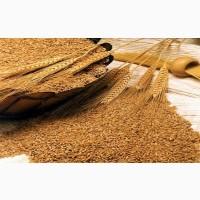 Комания Агро-Овен Закупает Пшеницу Фураж