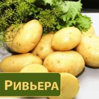 Продам картофеля по всем города Украины опт и розница, Выгодные цены