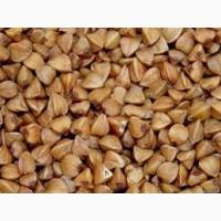 Семена гречихи сорт ГРЕНБИ КАНАДА 1 репрод