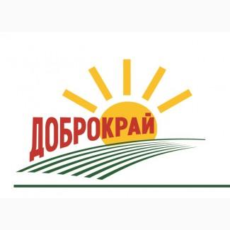 Закупаем пшеницу 2 кл, 3 кл, фураж в Запорожской обл