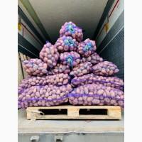 Продам лук репчатый в Украине от 20 тонн урожай 2019 года