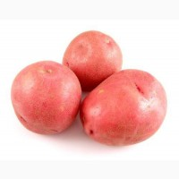 Продам картоплю королева Анна та Кардинал
