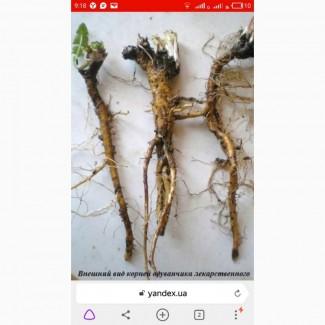 Закупаем лист и корень одуванчика, корень лопуха, девесила, алтея, аира по Украине, корень