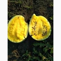 Продам вкуснейший, сладкий, сочный жёлтый арбуз ОРАНЖ КИНГ