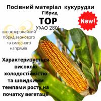 Посівний матеріал КУКУРУДЗИ. НОВИЙ гібрид -ТОР(ФАО280)