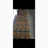 Оптовая продажа киви!Киви из Турции