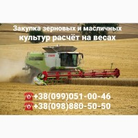 Закупка всех зерновых и масличных культур