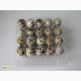 Прозрачная упаковка для перепелиных яиц