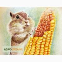 Семена кукурузы Лимагрейн ЛГ 3350, Джоди, ЛГ 30315, Адевей