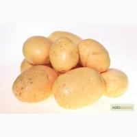 Картофель семенной Кроне Элита
