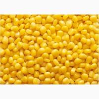 Куплю кукурузу Полтавськая область 1, 2 ф