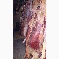 Есть покупатели баранины говядины живую, охлаждённые замореженую туши и полутуши
