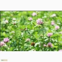 Заготовлю летом 2018 года дикорастущие травы и плоды для ваших домашних питомцев