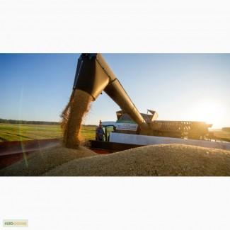 Куплю пшеницу.Возможен самовывоз