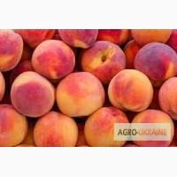 Продам плоды персика с собственного сада
