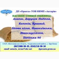 Насіння озимої пшениці Поліська 90 (БН, еліта, СН-1)