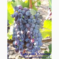 Продам виноград столовый. Большой выбор. В наличии