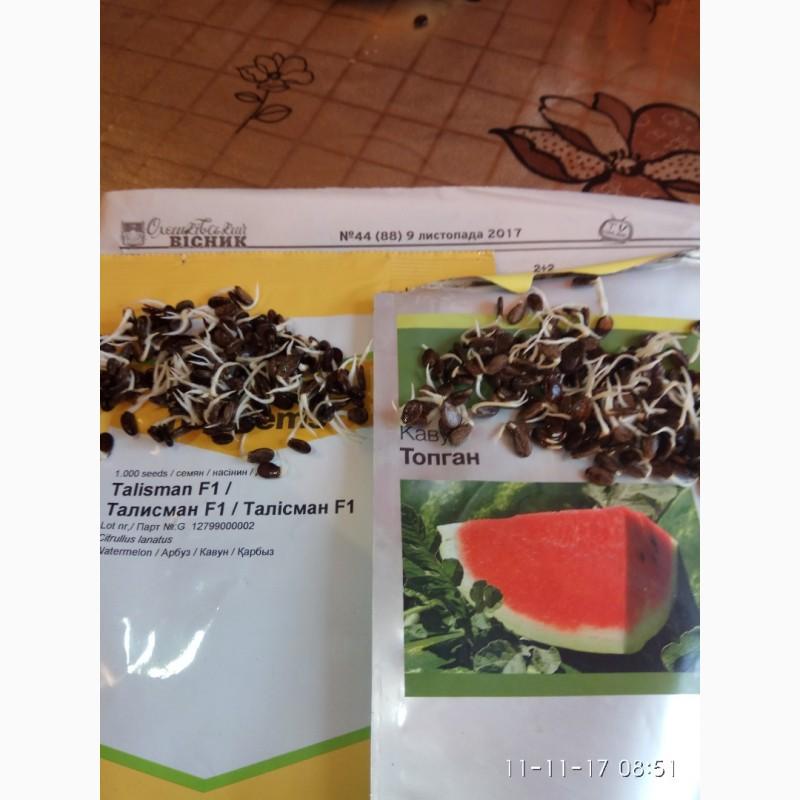 Продаю семена арбуза Топган и Талисман F2, Херсонская обл.