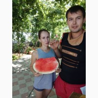 Продаю семена арбуза Топган и Талисман F2