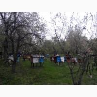Пчелопакети 2018