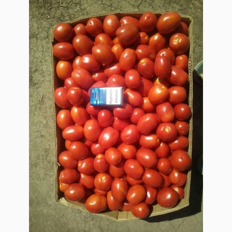Продам помидоры сорт сливка, Киевская обл.