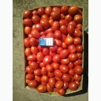 Продам помидоры сорт сливка