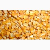 Куплю кукурузу (отходы кукурузы)