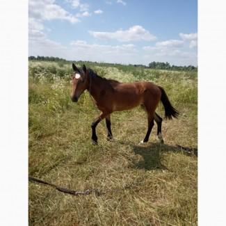 Продам коня(лошицю)