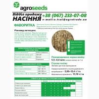 Насіння озимої пшениці Фаворитка (2019 року) від виробника