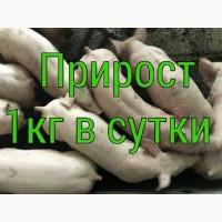 Продам поросят со свинокомплекса