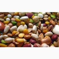 Куплю органические зернобобовые