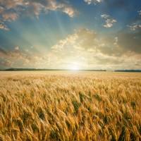 Куплю землю от 2га., сельхозпредприятие с плодородной землёй, площадью от 50 га