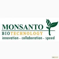 Куплю семена подсолнечника, кукурузы импортные(гибриды)
