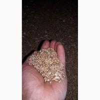 Зерно - ячмень, пшеница