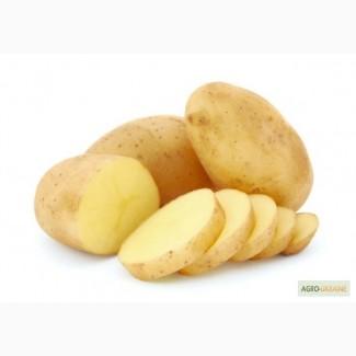 Картофель семенной Уладар Элита