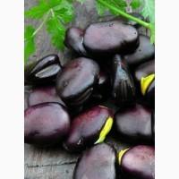 Пробам семена бобов