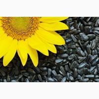 Продам насіння соняшника