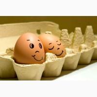 Купить Яйцо Фокси Чик. Инкубационные яйца кур, Кривой Рог
