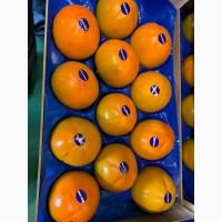 Испанская хурма, цитросовые из Испании