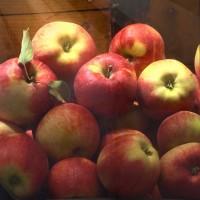 Яблоки высочайшего качества