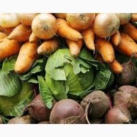 Закупаем картофель, морковь, лук, капусту белокочанную, свеклу