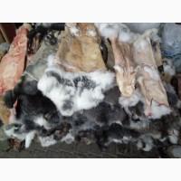 Куплю шкіри кролика дорого