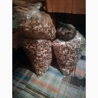 Продам сушені білі гриби зібрані в карпатах