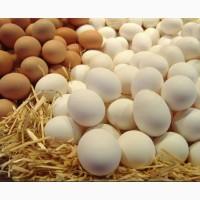 Продам яйца куриные