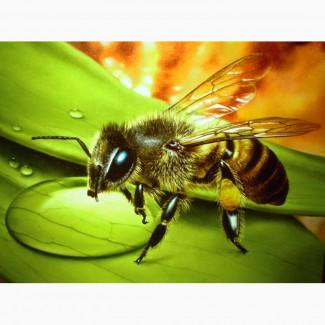 Продам бджолосім#039;ї - 2000 грн